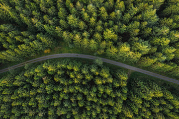 Curved path in the forest view from a drone