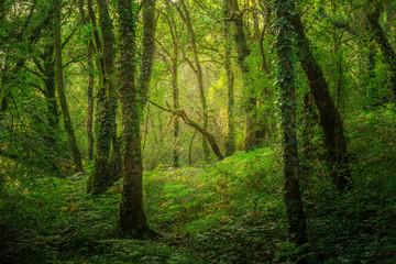 Landschaft geheimnisvoller Wald in zauberhaftem Licht - Landscape of mysterious forest in enchanting light