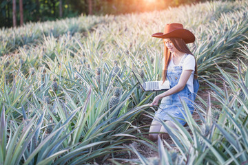 Agricultural researchers are studying the growth of pineapple plants, Female farmer asian  holding laptop in pineapple farm.