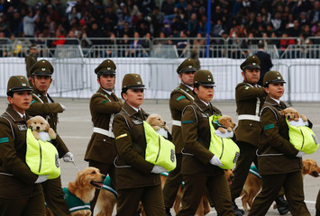 Chilean police officers march with golden retriever puppies during the annual military parade at the Bernardo O'Higgins park, in Santiago
