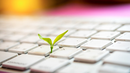 Leaves nature and keyboard.Small green plant growing from white computer keyboard.Technology with nature concept Wall mural