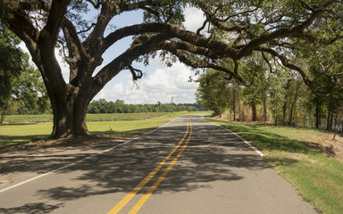 Rural Backroads Deep South Ancient Trees Louisiana USA