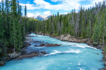 Aluminium Prints Forest river Glacier River in Yoho National Park, Canada