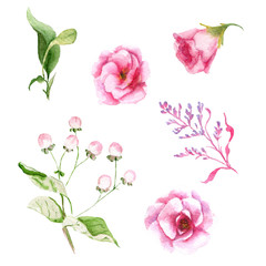 watercolor drawings of summer flowers, set, sketch