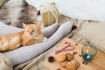 Fototapete - pets, hygge and christmas concept - red tabby cat lying on owner feet with gift, oatmeal cookies and candle at home