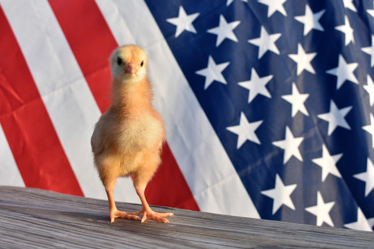 a chick with a flag background