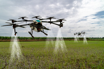 Wall Mural - iot smart agriculture industry 4.0 concept, drone (in precision farm) use for spray a water, fertilizer or chemical to the field, farm for growth a yields,crops, use for control, kill the bug or weed