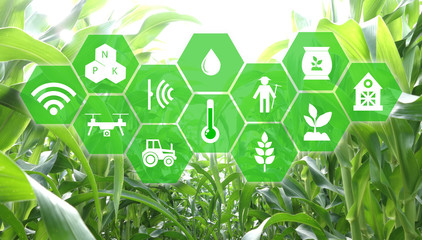 iot, internet of things, agriculture concept, Smart Robotic (artificial intelligence/ ai) use for management , control , monitoring, and detect with the sensor in the farm, field. Wall mural