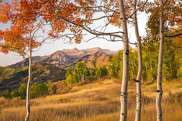Fall aspens in the Wasatch Back, Utah, USA.