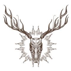Sketch of deer skull with decorative floral ornament.
