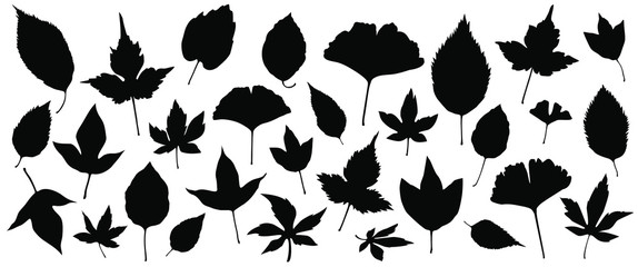 Set of silhouettes of the 30 autumn leaves vector illustrations - Isolated on white background Wall mural