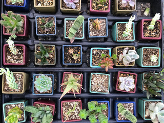 Succulent plants in artistic organization