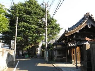 台東区谷中の寺町の風景(ヒマラヤ杉と延壽寺山門)