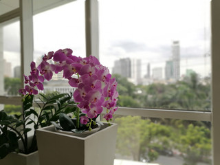 Artificial flowers. Purple orchids, Violet orchids. Orchid is queen of flowers in building Thailand.