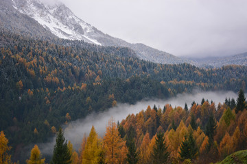 large forests divided between autumn and winter