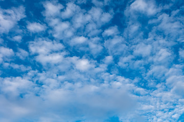 The sky and cloud in  morning