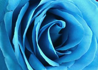 Photo sur Aluminium Macro photographie Blue rose bud close-up. Rose petals..