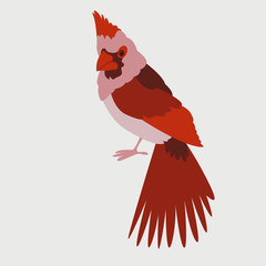 bird cardinal vector illustration flat style front