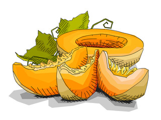 Vector illustration of drawing fruit melons.