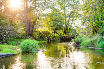 Photo of the picturesque banks of a river in a forest in nature.
