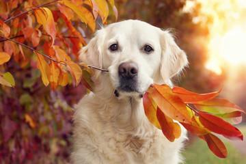Hund sitzt neben Baum und hat bunte Blätter im Maul