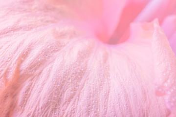 Foto op Aluminium Flamingo Background macro flower petals