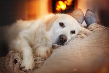 Hund liegt neben Mensch auf einem Sofa vor dem Kamin