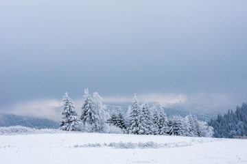 Fairy snowy winter Christmas landscape