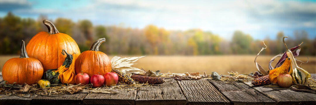 Thanksgiving With Pumpkins  Apples And Corncobs On Wooden Table With Field Trees And Sky In Background