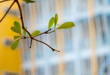 Freshness leaves on building background Wall mural