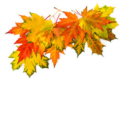 Yellow and orange beautiful autumnal maple leaves on a white background with space for text. Top view, flat lay