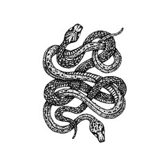 Dotwork Two Snakes
