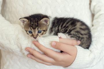 Little domestic kitty in girls hands