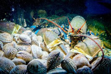 Colorful crawfish for sale, sea crustaceans with clams inside aquarium in a restaurant