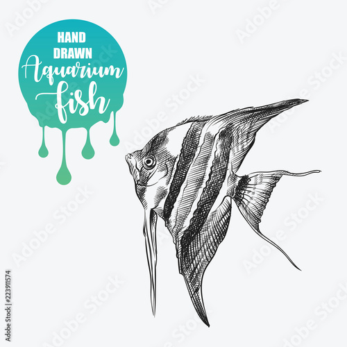 Hand Drawn Pterophyllum Sketch Isolated On White Background And Blob