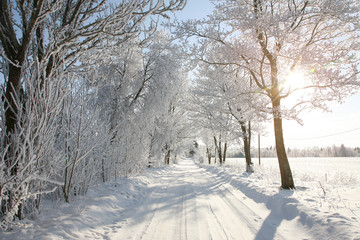 Gorgeous wintery snowy tree-lined path in the countryside. Trees covered with frost.