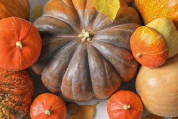 Many different pumpkins as background, closeup. Autumn holidays