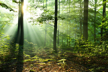 Beautiful sunrise in forest