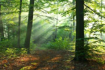 Keuken foto achterwand Bos in mist Beautiful sunrise in forest