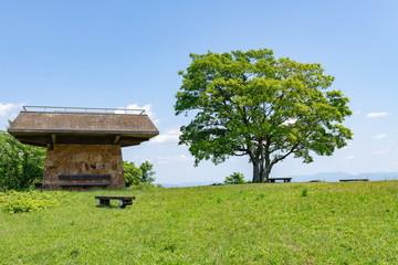 Lonely big green tree and sightseeing tower on the summit of Mt.kiyama in the sakaide city,Shikoku,Japan