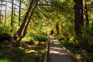 Beautiful path in the woods. Taken in Cape Scott Provincial Park, Northern Vancouver Island, BC, Canada.