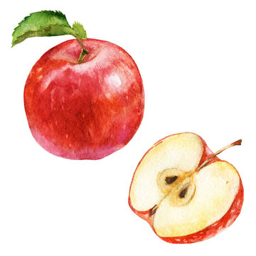 Watercolor illustration, set. Red apple and half of apple.