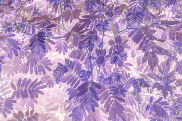 Purple leaf texture background material