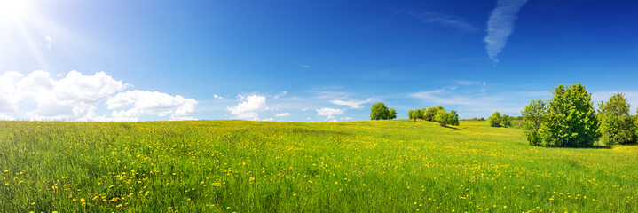Green field with yellow dandelions and blue sky. Panoramic view to grass and flowers on the hill on...