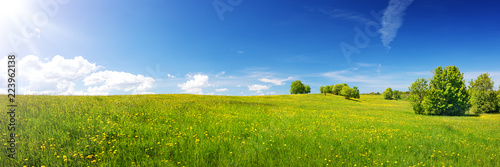 Wall mural Green field with yellow dandelions and blue sky. Panoramic view to grass and flowers on the hill on sunny spring day