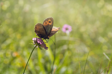 Butterfly in meadow