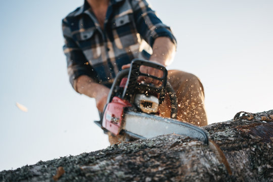 Strong professional logger in plaid shirt sawing tree with chainsaw, sawdust flay appart