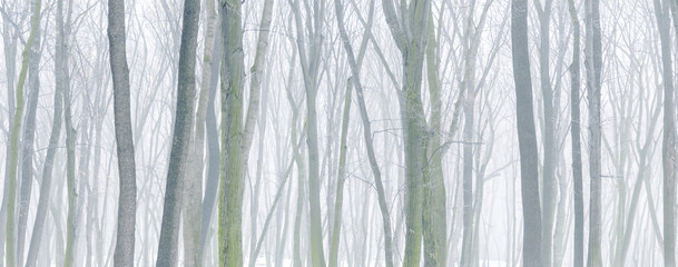 Panorama background of snowy forest at foggy winter day.