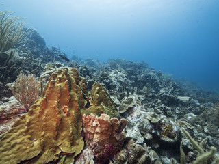 Seascape of coral reef / Caribbean Sea / Curacao with various hard and soft corals, sponges