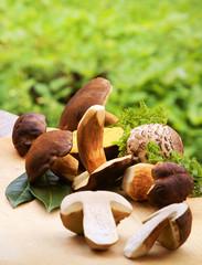Mushrooms, Pilze, Waldpilze, Textraum, copy space